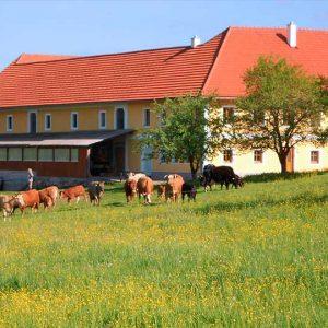 BV E., Niederwaldkirchen